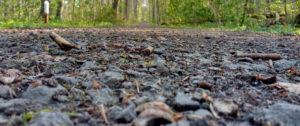 Waldboden Nahaufnahme Waldweg
